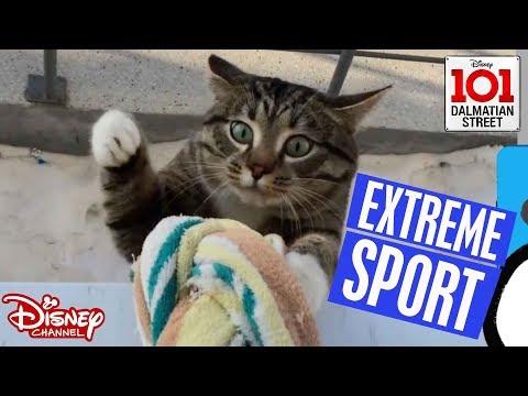 🏄🏽♂️ Extreme Sports | Animals vs Humans | 101 Dalmatian Street | Disney Channel Africa