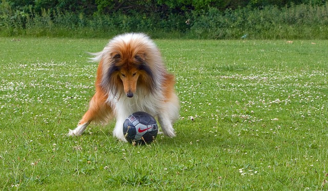 Soccer Tips For Both Novices And Pros