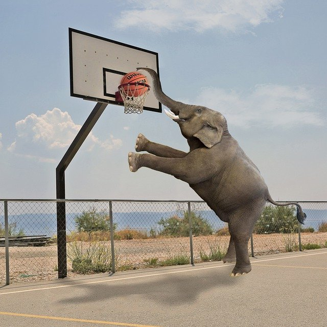 What You Have Always Wanted To Know About Basketball